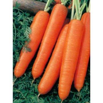 100 Scarlet Nantes Carrot Seeds