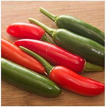 interesting 100 Heirloom Hot Serrano Chili Pepper seeds fast growing hot