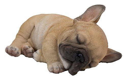 Sleeping Pug Puppy
