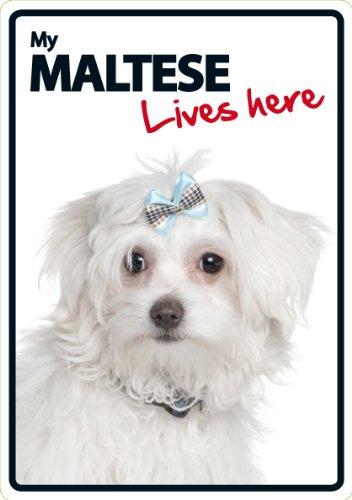 Maltese Lives Here Plastic Sign