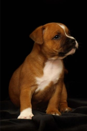 Little Staffordshire Bull Terrier Puppy Dog Pet Journal: 150 Page Lined ()