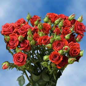 Valentine's Day Red Spray Roses Delivery | 100 Red Spray Roses by Global Rose (Image #2)