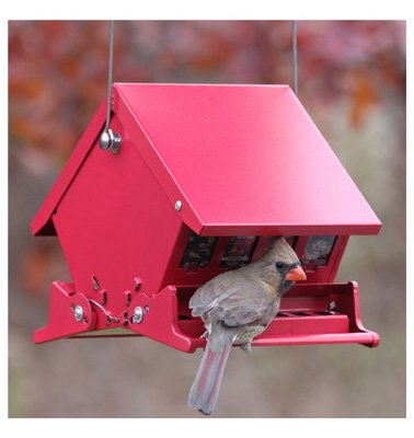Audubon 7458 4 Lb Capacity Squirrel Proof Bird Feeder