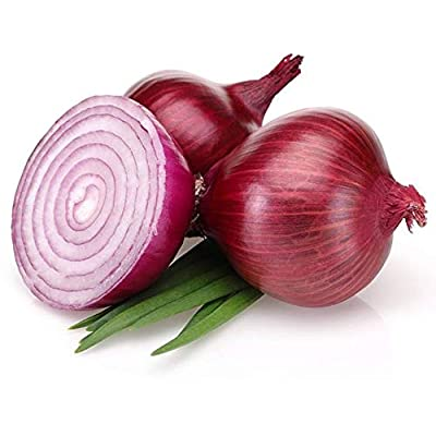 Onion Bombay red Seeds (avg 30-50) Seeds 4 : Garden & Outdoor