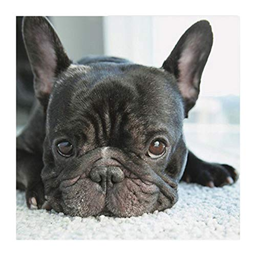 5D DIY Diamond Painting Cross Stitch Small Black Dog Heads Full Diamond Embroidery French Bulldog Round Diamond Mosaic,30x30cm ()