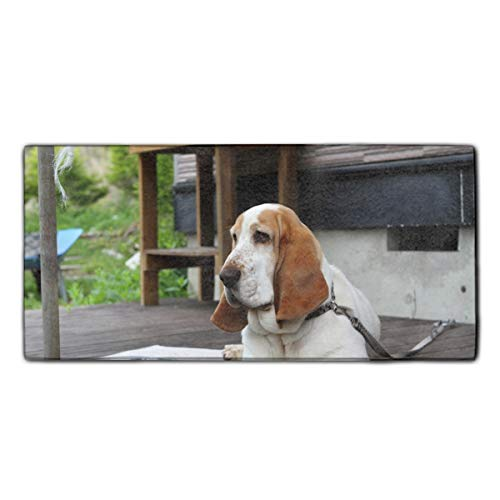Top 20 basset ear clip for 2020