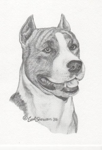 American Pit Bull (Staffordshire) Terrier Dog Earl Sherwan Portrait Matted Art Card - 5 in x 7 in Design - 8 in x 10 in Matted