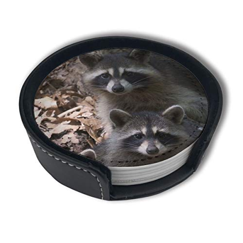 - HBLSHISHUAIGE Raccoon Animal Spring Coasters with Holder Set,Round Mugs and Cups Mat Pad for Drinks,Suitable for Home and Kitchen(6PCS)