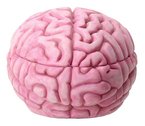 YTC 5.75 Inch Resin Zombie Brain Box Storage Container, Pink -