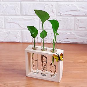 Buy Test Tube Glass Flowers Plant Vase Wooden Stand Holder Terrarium