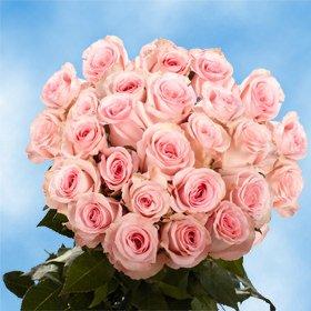 fresh-cut-roses-50-pink-roses