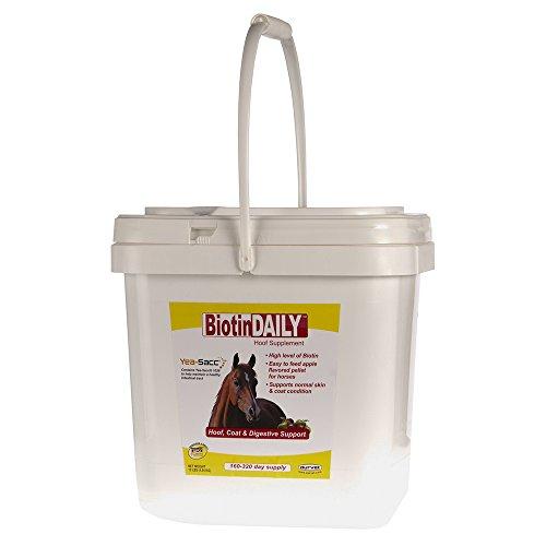 Biotin Daily Hoof Supplement For Horses