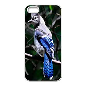 Case for IPhone 5,5S, Blue Jay Bird Case for IPhone 5,5S, Jackalondon White