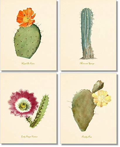 Cactus Wall Art - Desert Decor- Vintage Cacti Botanical Prints (Set of 4) - 8x10 - Unframed