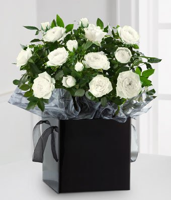 Warm Memories Of Love - Same Day Sympathy Flowers Delivery - Condolence Flowers - Funeral Flower Arrangements - Sympathy Plants