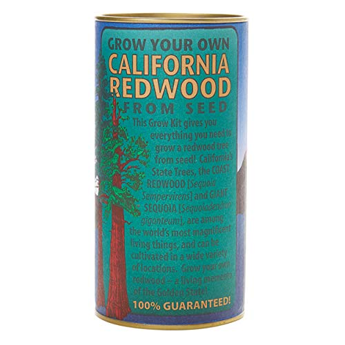 - California Redwood (Giant Sequoia) | Tree Seed Grow Kit | The Jonsteen Company