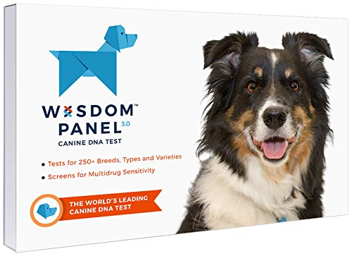Wisdom Panel 3.0 Breed Identification Dog DNA Test Kit | Canine Genetic Ancestry Test Kit for Dogs from Wisdom Health