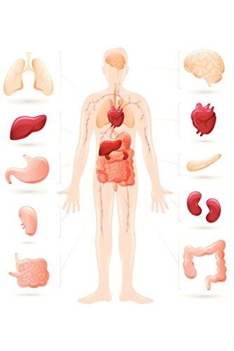 Human Body and Organs Anatomy Diagram Poster 24x36 inch