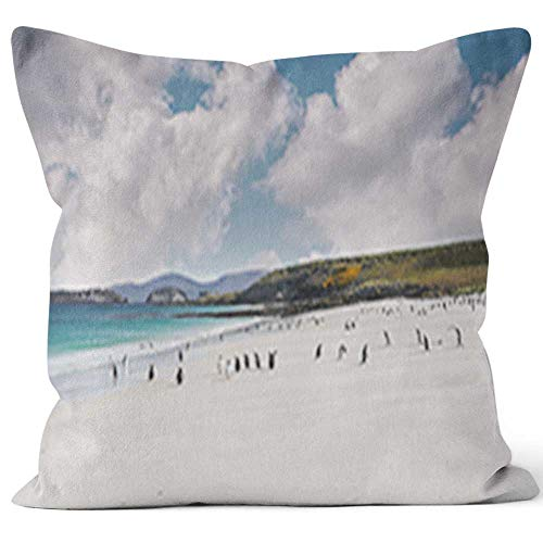 Colony of gentoo penguins playing and walking on a Falkland Islands white sandy beach with turquoise water and dramatic Throw Pillow Cushion Cover,HD Printing Decorative Square Accent Pillow Case,26