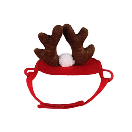 PetEnjoy Pet Costume for Cat Halloween Suit Wizard/Witch Hat Reindeer Antlers Hats for Pets Dogs Cats Doggy Kitty (Catdog Halloween Costumes)