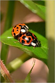 Book Ladybug Manufacturing, For the Love of Nature: Blank 150 page lined journal for your thoughts, ideas, and inspiration