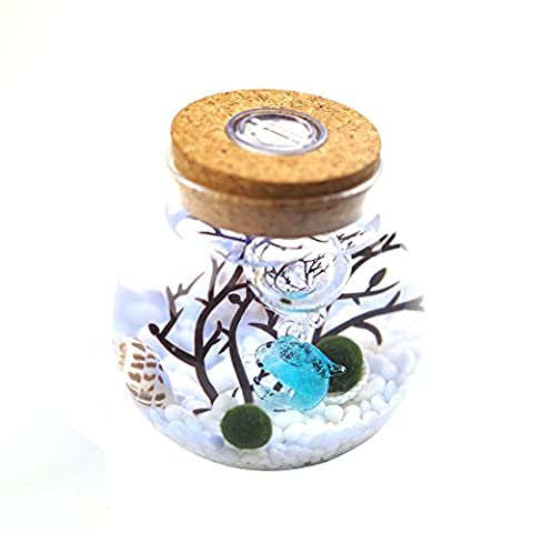 OMEM Aquarium Kits-Living Moss Ball,Valentine gift Sea Fan, Amazon Gravel, Cone Seashell, Work Desk Decoration (One years old, (Exchange Valentines For Kids)