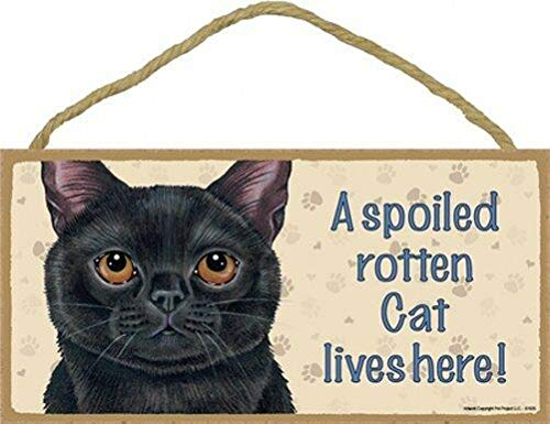- Cheyan A Spoiled Rotten Cat Lives Here Blk Kitty Wall Sign 5