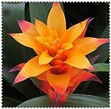 Shopvise 200 Pcs Cactus Bromeliad Rare Colorful Flower Plant Courtyard Mini Plant Succulent DIY Home Garden: 14