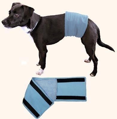 male dog wrap