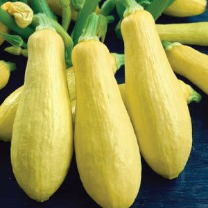 Summer Early Prolific Straightneck Squash Seeds(Yellow)! - 50+ Premium Heirloom Seeds - ON Sale! - Cucurbita Pepo - (Isla's Garden Seeds) - Non GMO - 90% Germination - Total Quality