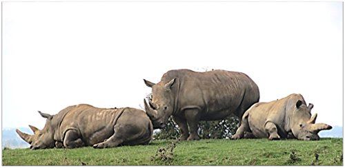 Download for free Rhino Images - Art and the Rhinoceros