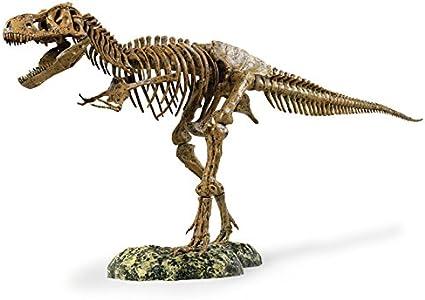 Amazon Com Edu Toys T Rex Skeleton 36 Scale Replica Model