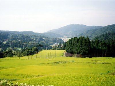 【令和元年産】新潟県上越妙高高原産こしいぶき(玄米10kg)