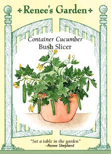 - Cucumber, Container, Bush Slicer