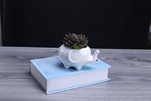 Elephant Pot (Wish you have a nice day Cute Elephant Flower Pot, Modern White Ceramic Succulent Planter Pots / Mini Flower Plant Containers (Cute Elephant))