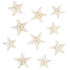 41wXh3wOMPL._SS300_ Seashell Wedding Favors & Starfish Wedding Favors