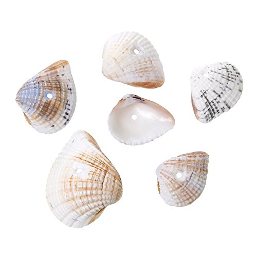 PEPPERLONELY Brand 100 Grams Natural Fan-Shaped Seashell Beads 24x19mm - 16x12mm