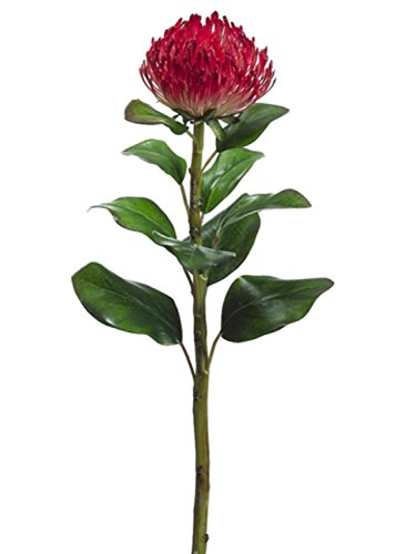 Club Pack of 12 Artificial Red Needle Protea Silk Flower Stems 28'' by CC Home Furnishings