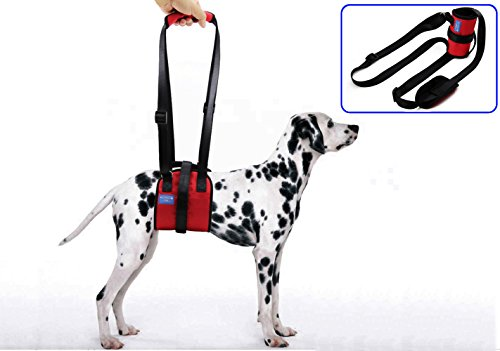 BIG SMILE PAW Dog Lift Support Harness,Height Adjustable Handle;Dog Mobility Harness with (Lift Handle)