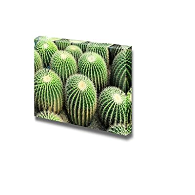 Canvas Prints Wall Art - Beautiful View of a Cactus | Modern Wall Decor/Home Art Stretched Gallery Wraps Giclee Print & Wood Framed. Ready to Hang - 32