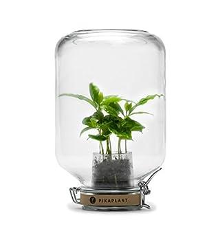 Pikaplant Terrarium en Verre ou Serre Autonome Jar/Plante d ...
