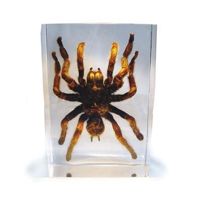 ED SPELDY EAST DD30L Desk Decoration, Large, Tarantula (Tarantula Desk Decoration)