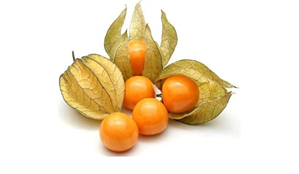 Amazon.com : alkekenig Cape Gooseberry Fruit Seeds (Pack of avg ...
