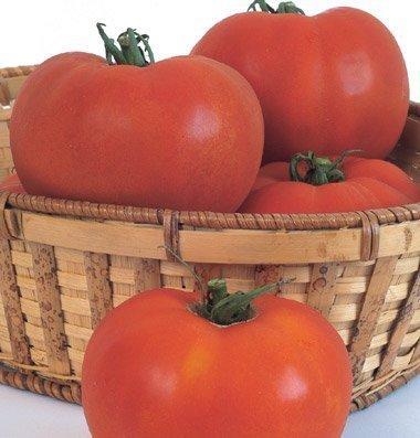 Legend Online Garden Seeds Tomato Beefsteak Celebrity DS733 (Red) 25 (Grow Beefsteak Tomatoes)