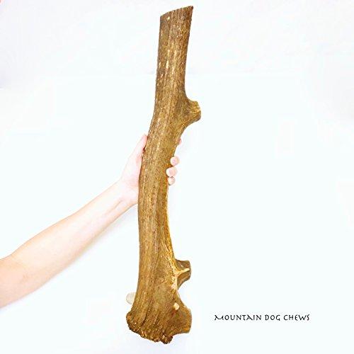 Mountain Dog Chews- Mammoth Mega-Monster Jumbo Elk Antler Dog Chew 23-24 Inch & Typlcally 4 to 5 Pounds Grade-A+ Made In The USA From The Freshest, Highest Quality Elk Antlers.! by Mountain Dog Chews