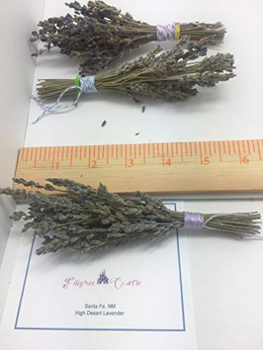 Dried Organic High Desert Lavender Flowers, Hand Picked Mini Bunches 6-7