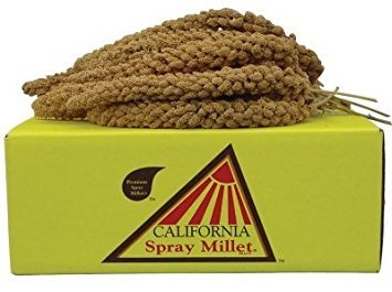 California Golden Spray Millet for Birds - Premium Spray Millet by GOLDEN FARMS PRODUCTS