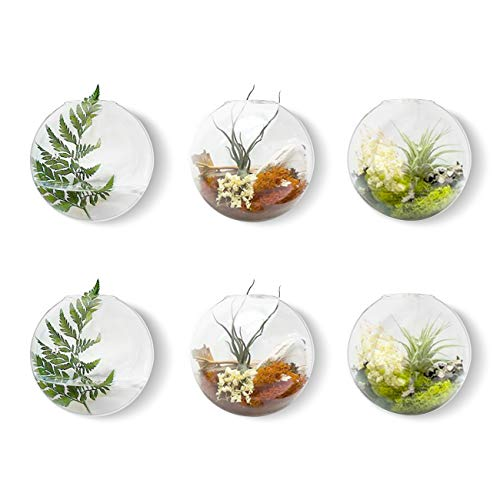 Mkono 6 Pack Glass Wall Hanging Planter Globe Air Plants Terrariums Wall Mounted Plant Vase Indoor for Home Office Living Room Decor, 4.72