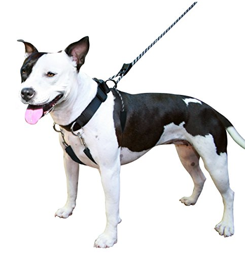 (SPORN Dog Training Halter, Black, Medium)