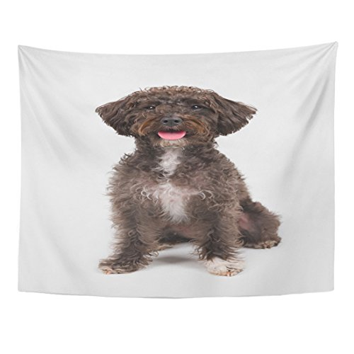 Emvency Tapestry Alert Black Schnoodle Schnauzer Poodle Breed Dog Sitting White Animal Canine Home Decor Wall Hanging for Living Room Bedroom Dorm 60x80 Inches